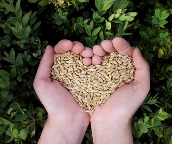 Graines agriculture bio locale respectueuse de l'environnement au Beaupré Biomonde Royan
