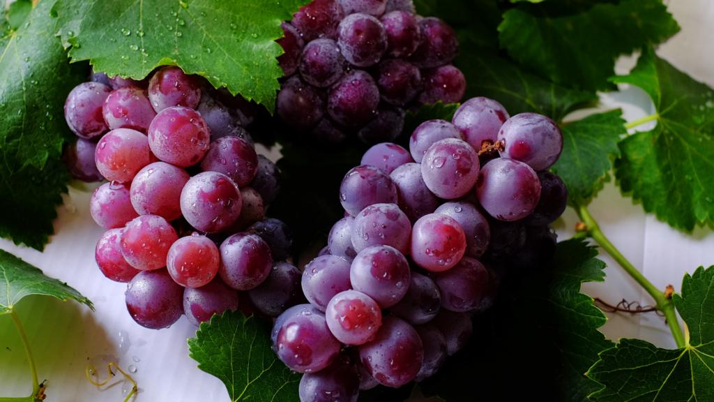 Raisin frais et bio en septembre le beaupré Biomonde Royan