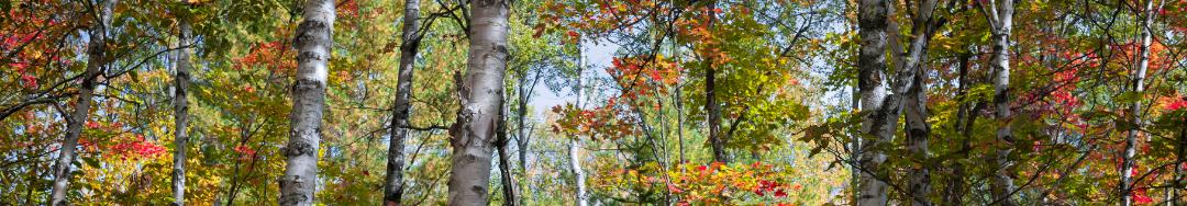 forêt des Pyrénées pour cure de sève EVE SEVE DE MONTAGNE