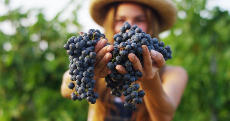Monodiète de raisin et cure avec du bon raisin bio du Biomonde de Royan